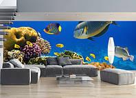 "Фотообои ""Кораллы и рифы"", Фактурная текстура (холст, иней, декоративная штукатурка)"