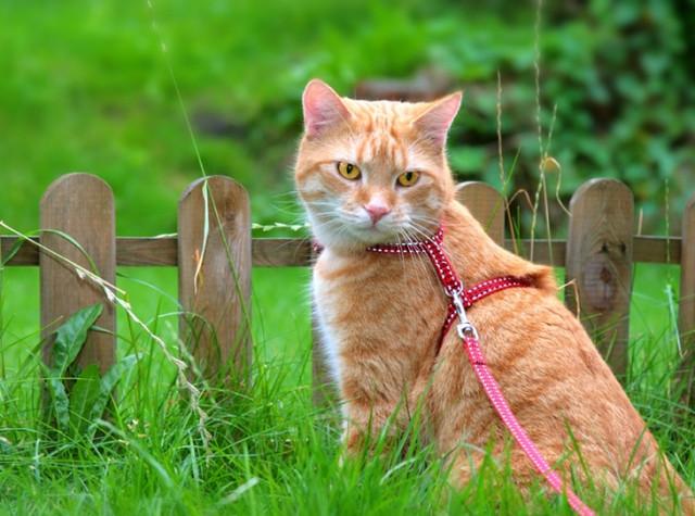 Поводки для котов