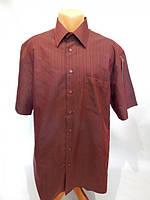 157РК Мужская рубашка с коротким рукавом INFINITY, фото 1