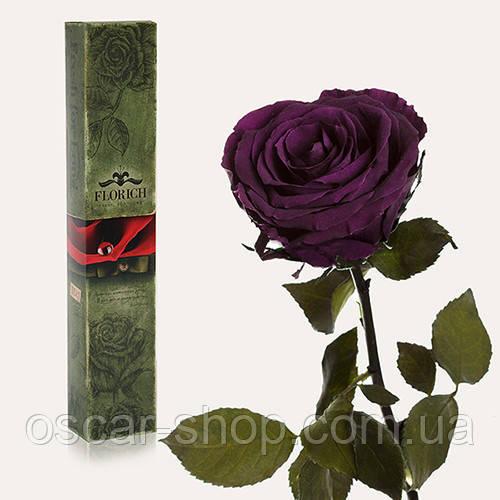 Долгосвежая живая роза Florich в подарочной упаковке  - ФИОЛЕТОВЫЙ АМЕТИСТ (5 карат на коротком стебле)