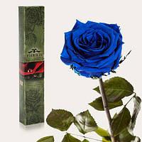 Долгосвежая живая роза Florich в подарочной упаковке  - СИНИЙ САПФИР (7 карат на коротком стебле)
