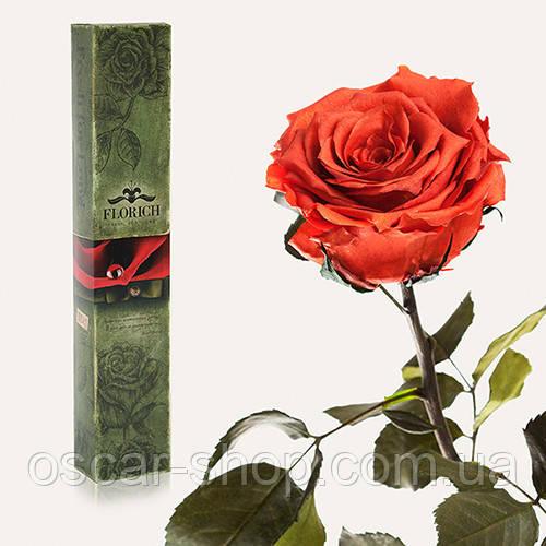 Долгосвежая живая роза Florich в подарочной упаковке  - КОФЕЙНЫЙ ТОПАЗ (5 карат на коротком стебле)