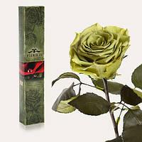 Долгосвежая живая роза Florich в подарочной упаковке  - ЛАЙМОВЫЙ НЕФРИТ (5 карат на коротком стебле)