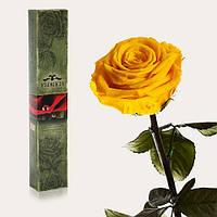 Долгосвежая живая роза Florich в подарочной упаковке  - СОЛНЕЧНЫЙ ЦИТРИН (5 карат на коротком стебле)