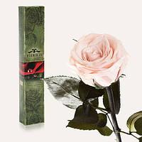 Долгосвежая живая роза Florich в подарочной упаковке  - РОЗОВЫЙ ЖЕМЧУГ (7 карат на коротком стебле)