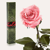 Долгосвежая живая роза Florich в подарочной упаковке  - РОЗОВЫЙ КВАРЦ (7 карат на коротком стебле)