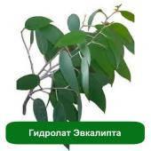 Гидролат Эвкалипта, 1 литр