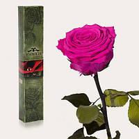 Долгосвежая живая роза Florich в подарочной упаковке  - МАЛИНОВЫЙ РОДОЛИТ (7 карат на коротком стебле)
