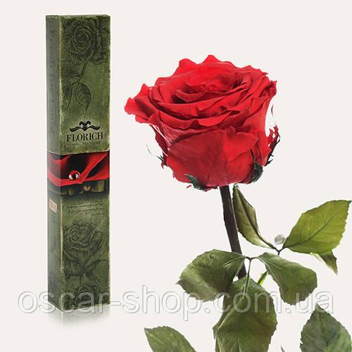 Долгосвежая живая роза Florich в подарочной упаковке  - АЛЫЙ РУБИН (7 карат на коротком стебле)
