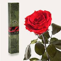 Долгосвежая живая роза Florich в подарочной упаковке  - КРАСНЫЙ РУБИН (5 карат на коротком стебле)