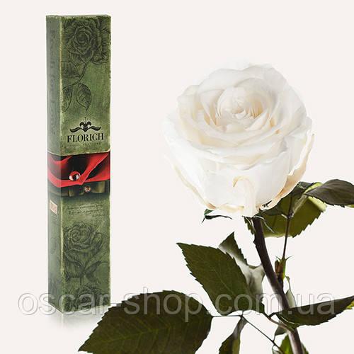 Долгосвежая живая роза Florich в подарочной упаковке  - БЕЛЫЙ БРИЛЛИАНТ (7 карат на коротком стебле)