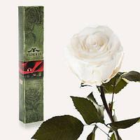 Долгосвежая живая роза Florich в подарочной упаковке  - БЕЛЫЙ БРИЛЛИАНТ (5 карат на коротком стебле)