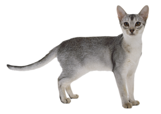 Консерва для стерилизованных кошек, паштет Royal Canin Sterilised
