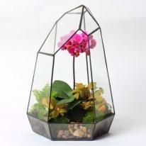 Флорариум (террариум) для цветов (Кристалл) 300х160