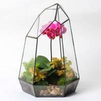 Флорариум (террариум) для цветов (Кристалл) 180х260