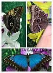 Наши бабочки