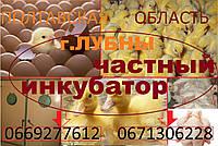 Суточные цыплята (КОББ 500)