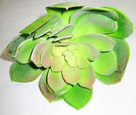 Суккулент Эхеверия 19 см, зеленая