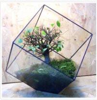 Флорариум  для цветов( Куб усеченный ) 220х220