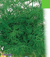 Пакетированные Семена  укропа Алегатор обычный кустовой