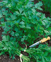 Пакетированные Весовые семена петрушки листовая Титан (Голандия) очень урожайная выгодна   для выращивания на зелень.