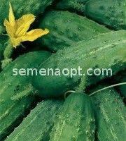 Пакетированные Весовые семена Огурца Аист