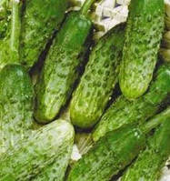 Пакетированные Весовые семена огурца Эра