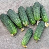 Пакетированные Семена огурца весовые сорт  Береговой