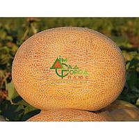 Пакетированные Продам  семена дыни Алушта оптом в Одессе