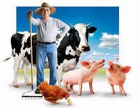 Створення фермерського господарства