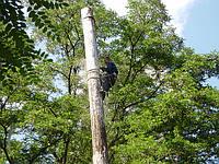 Спил аварийных деревьев, фото 1