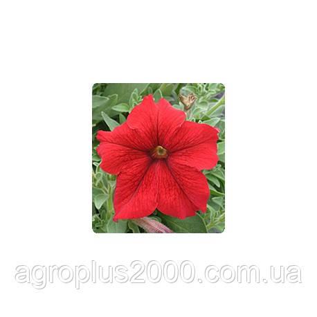 Семена Петуния грандифлора Виртуоз F1 Красная Red 500 драже Kitano Seeds