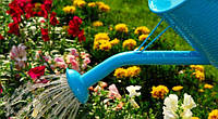Если нет автоматического полива, как правильно поливать растения