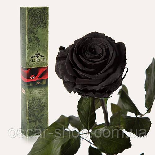 Долгосвежая живая роза Florich в подарочной упаковке  - ЧЕРНЫЙ БРИЛЛИАНТ (7 карат на среднем стебле)