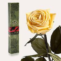 Долгосвежая живая роза Florich в подарочной упаковке  - ЖЕЛТЫЙ ТОПАЗ (7 карат на среднем стебле)