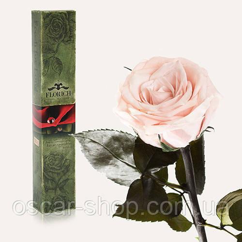 Долгосвежая живая роза Florich в подарочной упаковке  - РОЗОВЫЙ ЖЕМЧУГ (7 карат на среднем стебле)