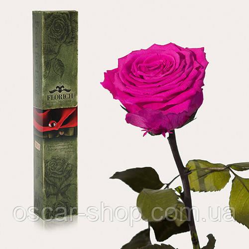 Долгосвежая живая роза Florich в подарочной упаковке  - МАЛИНОВЫЙ РОДОЛИТ (7 карат на среднем стебле)
