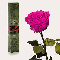 Долгосвежая живая роза Florich в подарочной упаковке  - МАЛИНОВЫЙ РОДОЛИТ (7 карат на среднем стебле), фото 1
