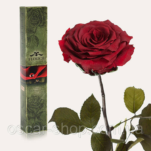 Долгосвежая живая роза Florich в подарочной упаковке  - БАГРОВЫЙ ГРАНАТ (7 карат на среднем стебле)