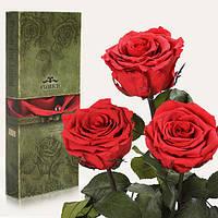 Три долгосвежих розы Florich в подарочной упаковке  - АЛЫЙ РУБИН (5 карат на коротком стебле)
