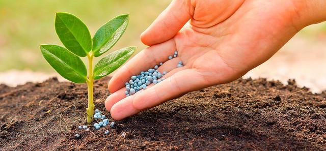 Удобрения и средства защиты