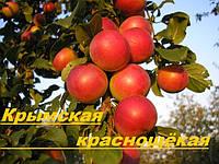 Саженцы плодовых деревьев Алыча, Алычи Крымская краснощёкая