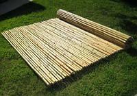 Забор(ограждения) из бамбука 600х100см  диаметр 12-14мм.