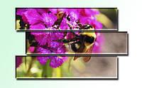 """Модульная картина """"Пчела"""". Печать фото на холсте."""