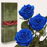 Три долгосвежих розы Florich в подарочной упаковке  - СИНИЙ САПФИР (7 карат на коротком стебле)