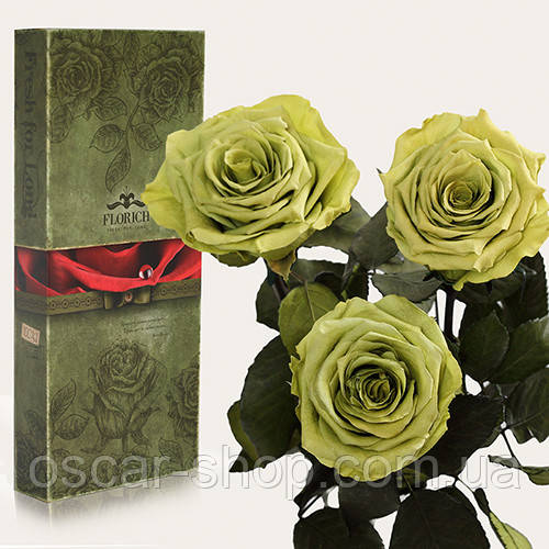 Три долгосвежих розы Florich в подарочной упаковке  - ЛАЙМОВЫЙ НЕФРИТ (7 карат на коротком стебле)