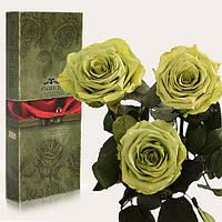 Три долгосвежих розы Florich в подарочной упаковке  - ЛАЙМОВЫЙ НЕФРИТ (7 карат на коротком стебле), фото 1