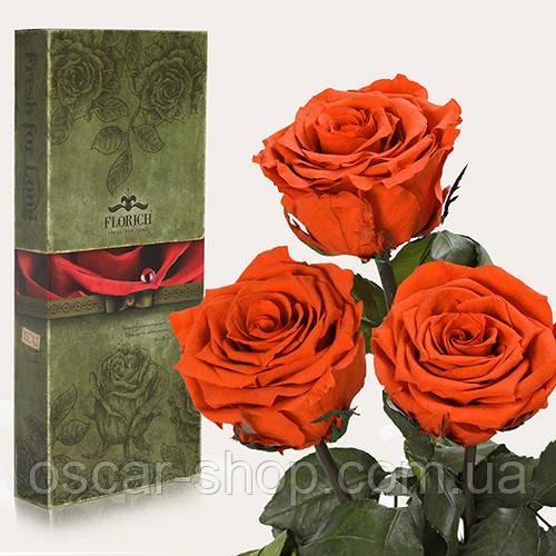 Три долгосвежих розы Florich в подарочной упаковке  - ОГНЕННЫЙ ЯНТАРЬ (7 карат на коротком стебле)