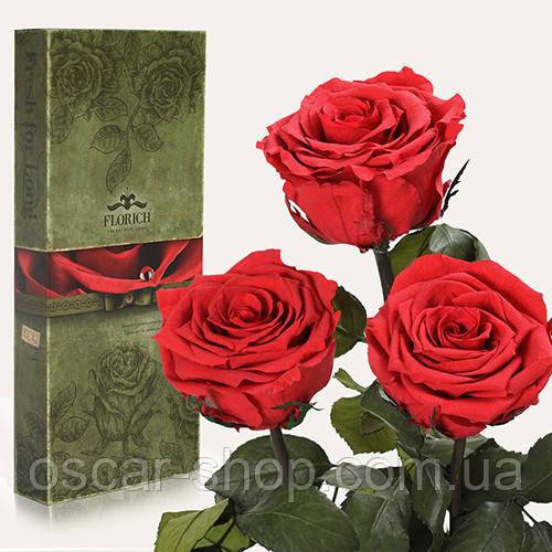 Три долгосвежих розы Florich в подарочной упаковке  - АЛЫЙ РУБИН (7 карат на коротком стебле)