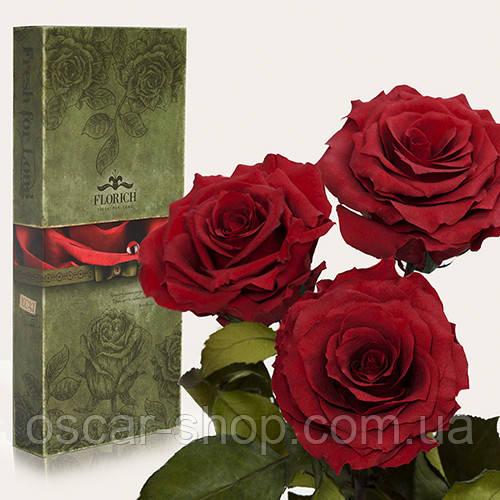 Три долгосвежих розы Florich в подарочной упаковке  - БАГРОВЫЙ ГРАНАТ (7 карат на коротком стебле)